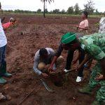 Journée de l'arbre au Togo: Sotouboua au rendez-vous