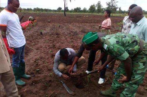 Article : Journée de l'arbre au Togo: Sotouboua au rendez-vous
