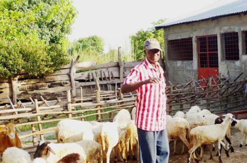 Article : Une ferme d'élevage de petits ruminants à Adjengre