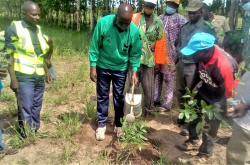 Article : Journée de l'arbre au Togo : l'association VHEDA s'est engagée à Atanko (Sessaro)
